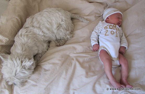 mitä vauvalle tarvitsee