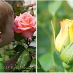 Ruusutarhassa