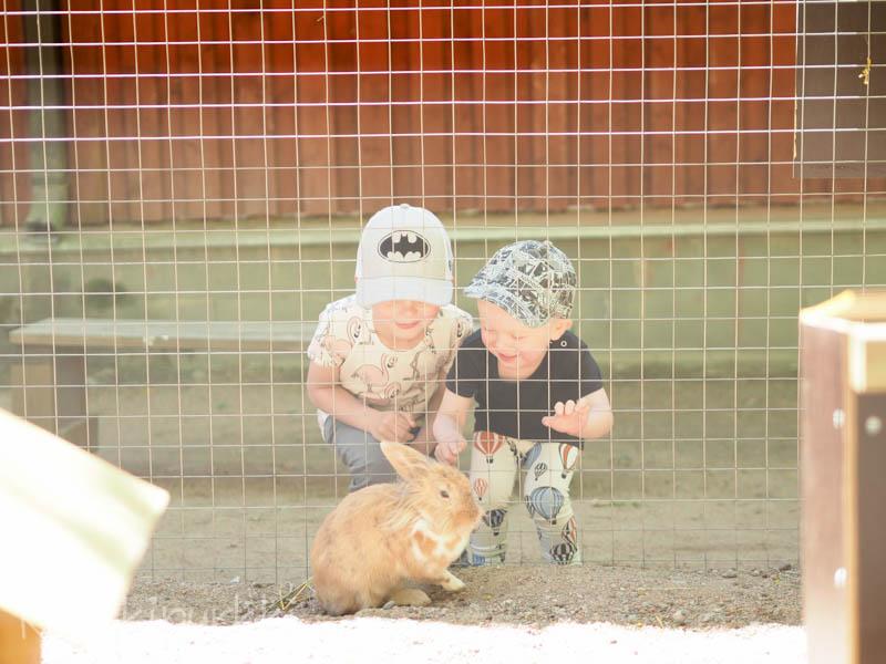 kiviniityn kotieläinpuisto
