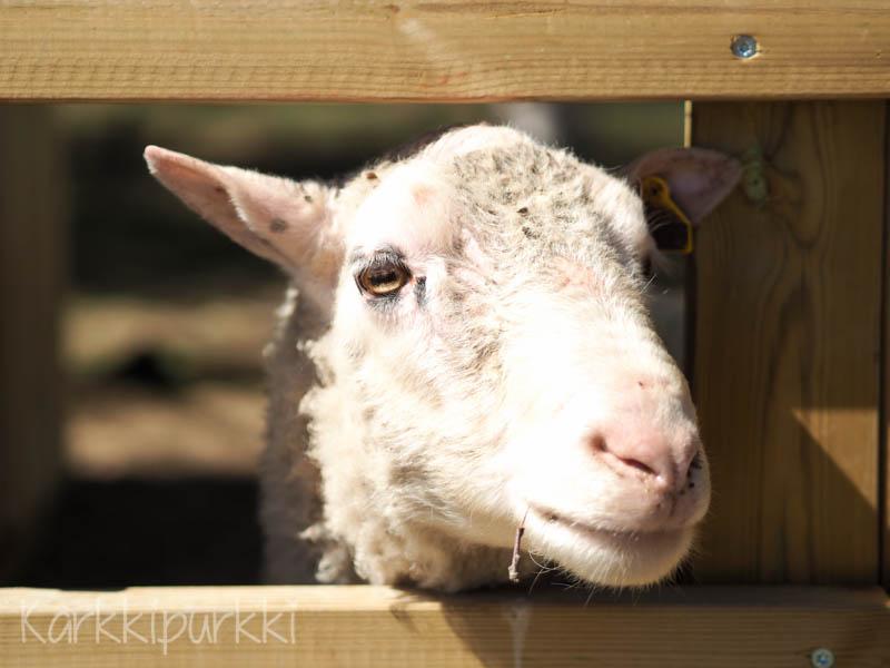 kotieläinpuisto blogi